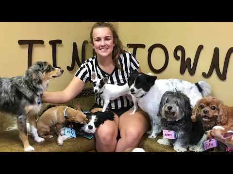 Small Dog Daycare & Cage-free Boarding with anytime web-cam access compliments of Always Unleashed