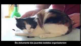 Зооклуб с Яном Лаврентьевым. Подготовка кошки к выставке