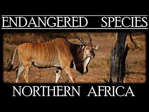 Endangered Species in Northern Africa