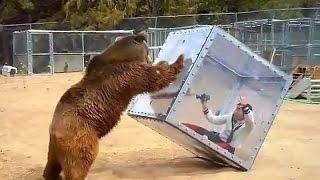 Нападение медведя в цирке