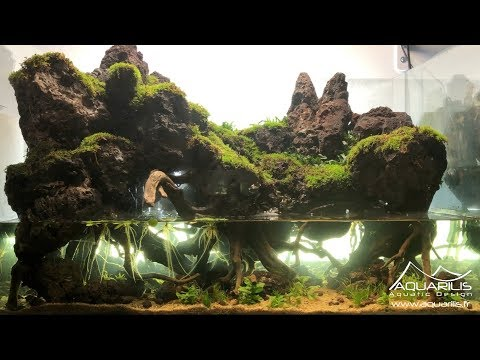 Un paludarium en aquascaping ! Un d茅cor inspir茅 du Mordor - Par Laurent Garcia
