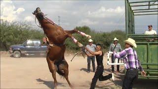 Carreras de Caballos en Cumpas, Son. 3 de Octubre 2015