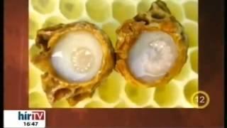 Méhpempő felállítása - Torna a pénisz megnagyobbodásához otthon