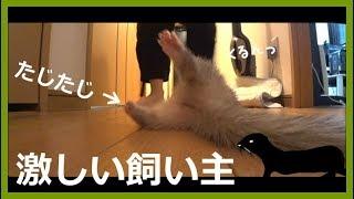 奇声、がに股、挙動不審、息切れ、疲れ、の飼い主の動画。 足にごみつい...