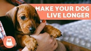 How to Make a Dog Live Longer - 10 Tips