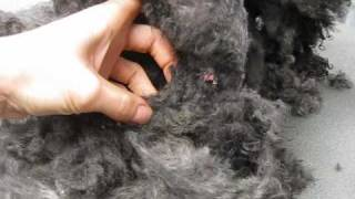 Matted Poodle.wmv