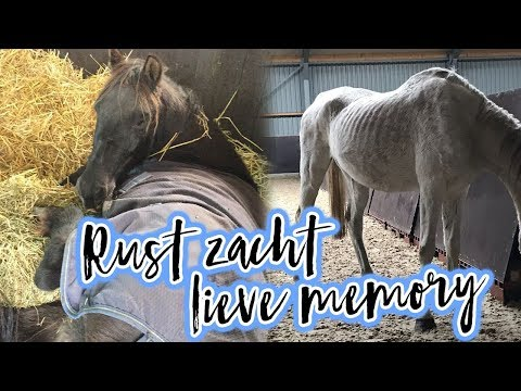 Verwaarloosde pony's opvangen