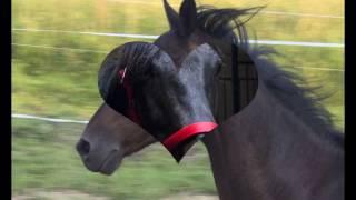 konie ze Stajni TARA :) tylko niektóre :)
