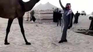 الفردية رمانه بنت رمان للمالك الامير فيصل بن سعود الكبير