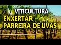 PORTAL GADO BRAVO SUDOESTE - YouTube
