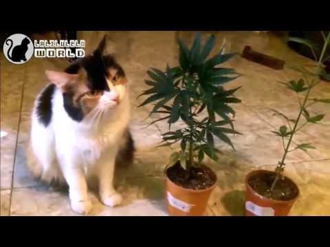 Video Kucing Lucu - Kucing Lucu Banget Bikin Ngakak 2017