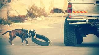 كلب البول ترير الجزء 3 كلب سريع جدا مع جمال العمواسي