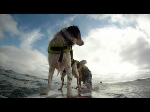 Suya's 1st time tandem dog surfing!