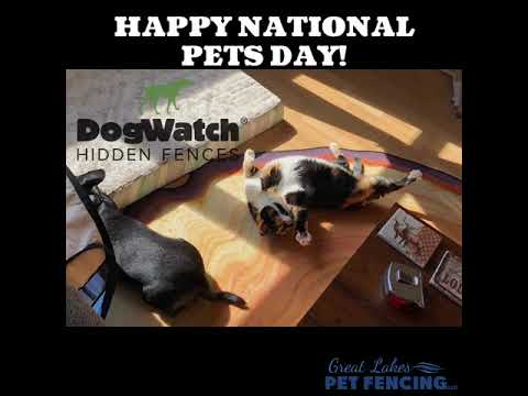 Happy National Pets Day!