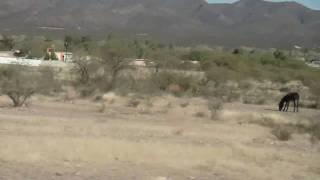 Pasando por Linares Del Rio, Rodeo Durango.MP4