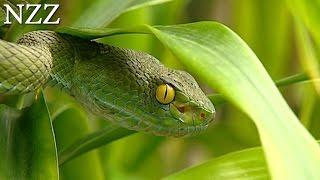 Sie heilen und sie töten: Schlangen - Dokumentation von NZZ Format (2004)