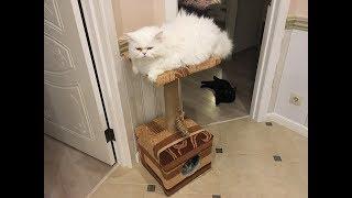 Кошачий домик своими руками. Обновление.