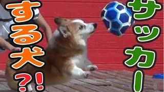 看板犬やキッズも登場し、サッカーボール&猫(犬?!)じゃらしで遊びま...