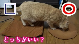 猫は丸と四角、どっちのあったかマットを選ぶ? サビイロネコ 検索動画 27