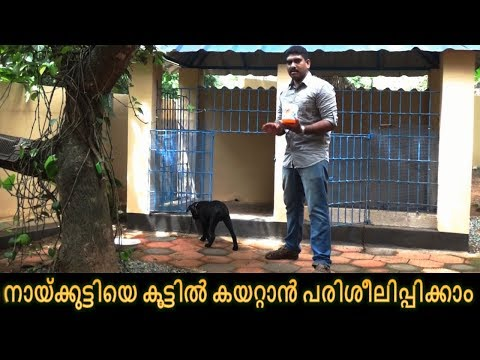 dog training : ' Get inside'  Malayalam : kerala dog training : വളര്ത്തു നായയെ പരിശീലിപ്പിക്കാം