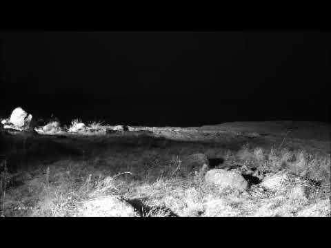 Kulgur Estonia 2017 12 27 alarm call from someone 7:17