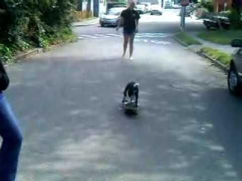 McNab puppy teaches himself ..