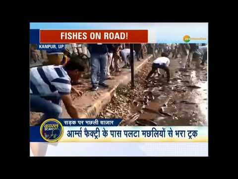 Viral: सड़क पर पलटा मछलियों से भरा ट्रक