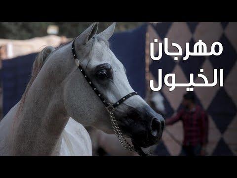 منافسة بين 100 حصان على لقب البطولة الدولية لجمال الخيول العربية الأصيلة  - 10:54-2019 / 11 / 2