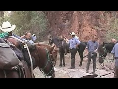 Grand-Canyon - Trail Of No Return - with Missouri Foxtrotter