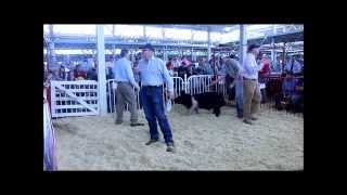 $90,000 Champion Hampshire Boar, 2015 World Pork Expo