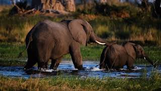 Xigera Safari Lodge | Botswana