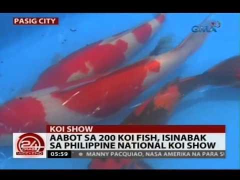 24 Oras: Aabot Sa 200 Koi Fish, Isinabak Sa Philippine National Koi Show