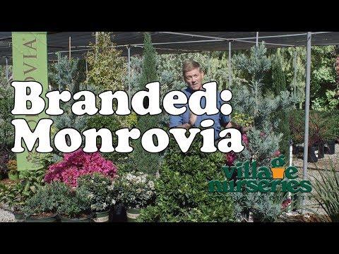 Village Nurseries Branded Program: Monrovia