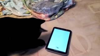 Коты играют в планшет