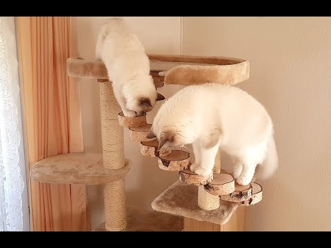 Old cat tree gets a few new adjustments