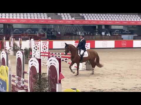 Bombay ter Doorn Z stallion competition