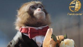 【大分市PR映像】猿が主演のショートフィルムが素敵すぎる