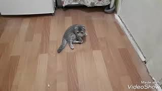 Котенок, первые шаги после того, как принесли домой