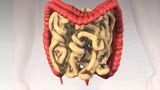 Repeat youtube video Home Colonic Irrigation Cleansing - Hemorroid Treatment