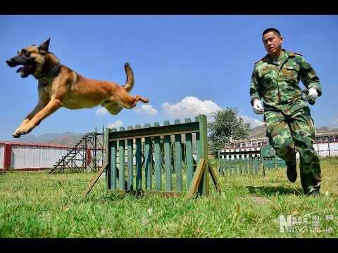 How are China's best search and rescue dogs trained?