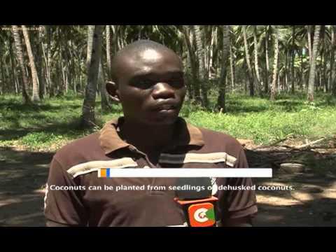 Smart Farm - Coconut Farming