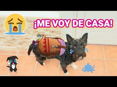 Lana se ENTERA QUE ES ADOPTADA y se VA DE CASA! Videos de perros