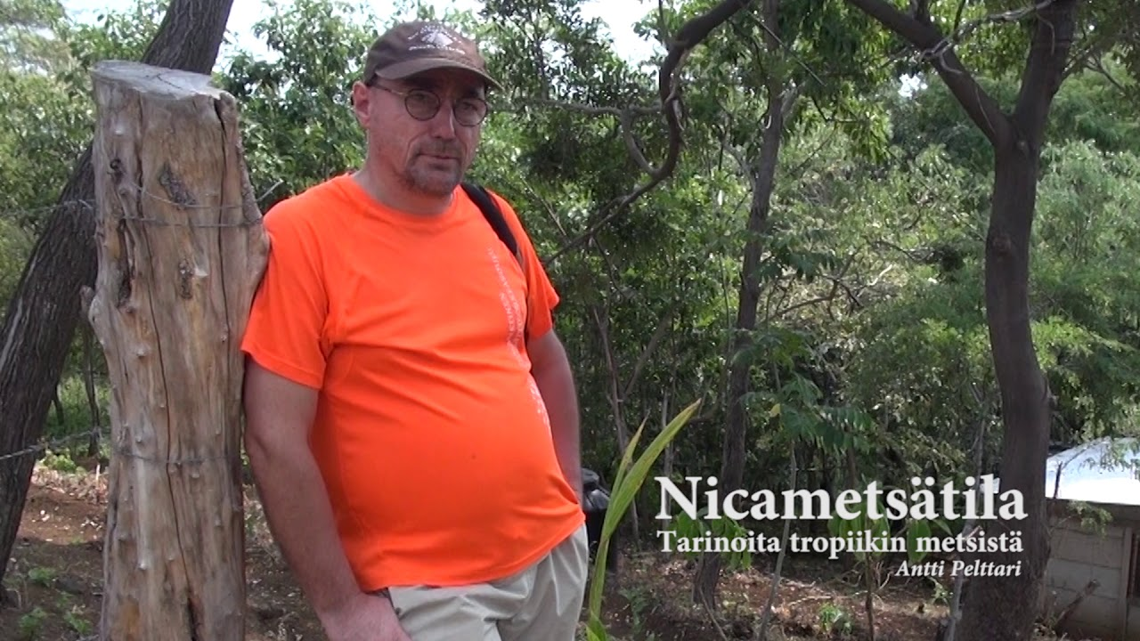 Nicametsätarinoita, osa 12