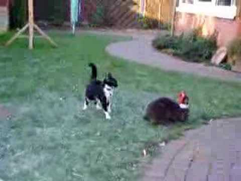 Jagt Kaninchen Katze opportunities