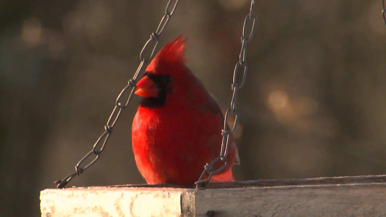 backyard birding discover nature jan 2015 youtube