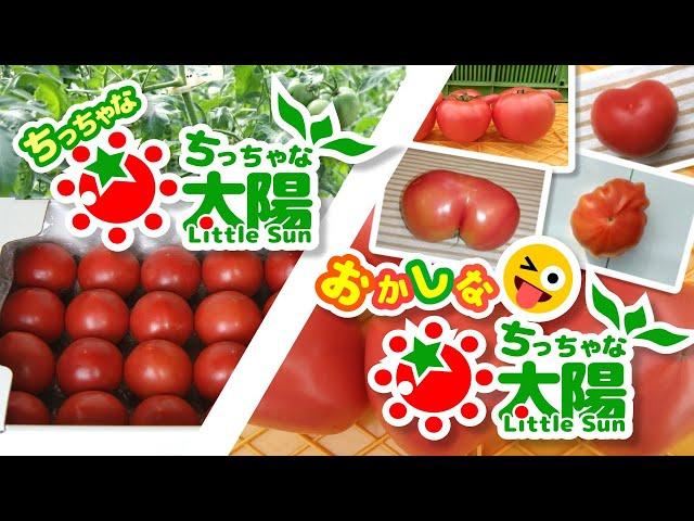 新たなるトマトたち