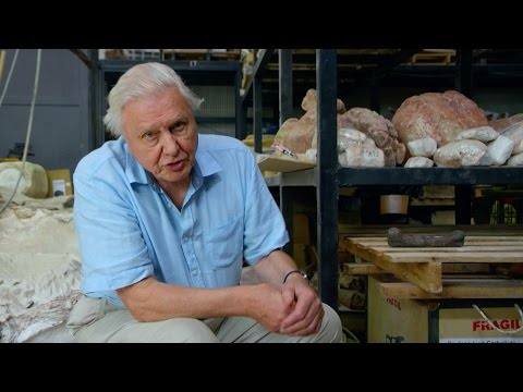 The largest thighbone ever found - Attenborough and the Giant Dinosaur: Preview - BBC One