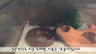 하우스 게코 도마뱀 먹방, 사슴벌레 젤리 먹기, 애완동…