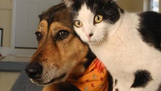 Funny Cats and Dogs Compilation