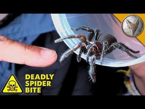 DEADLIEST SPIDER BITE!
